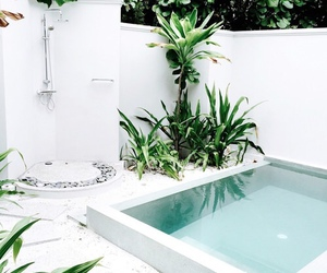 pool, plants, and summer image