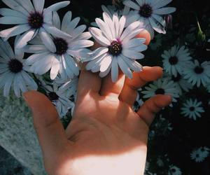 flowers, hand, and nature image