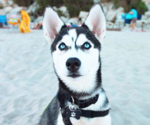 animal, beach, and puppy image