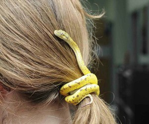 snake, hair, and animal image