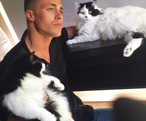 colton haynes and cat image