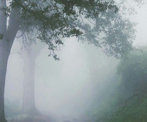 grunge, nature, and fog image
