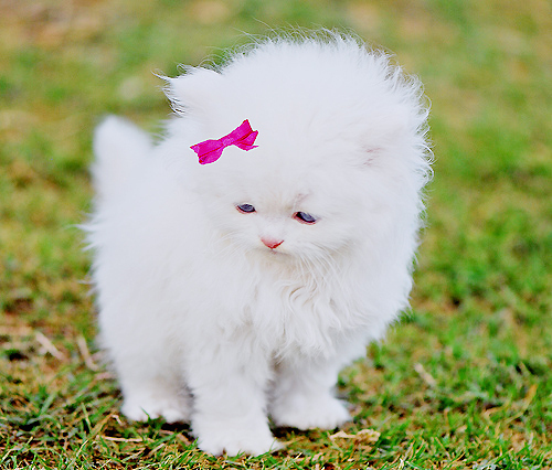 Cat Cute Kitty Pink Inspiring Picture On Favim Com