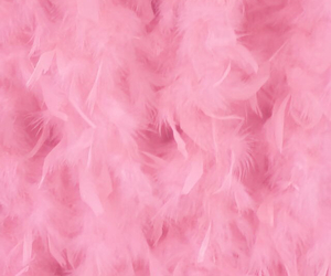 feathers and pink image