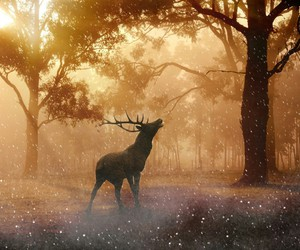 animal, forest, and deer image
