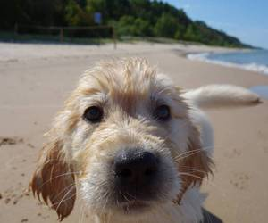 puppy, beach, and dog image