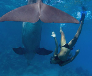 beach, dolphins, and dive image