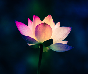 lotus and flower image
