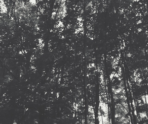 background, black, and forest image