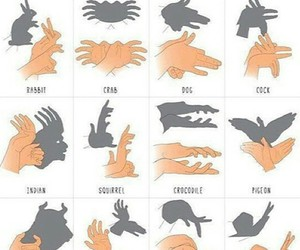 ombre, animal, and hands image
