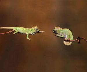chameleon and animal image