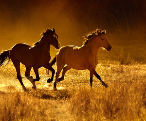 horse, free, and animal image