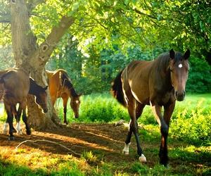 beautiful, free, and horses image