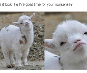 fun, funny, and goat image