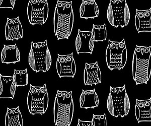 b&w, grunge, and owl image