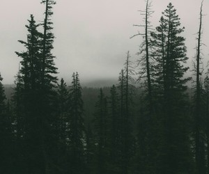 beautiful, forest, and grunge image