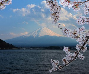 nature, mountain, and sakura image