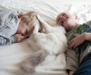 cats, mom, and ragdoll image