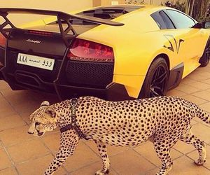 car, luxury, and yellow image