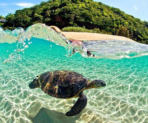 turtle, summer, and beach image