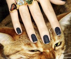 cat, nails, and rings image