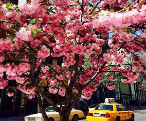 flowers, spring, and taxi image