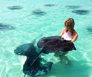 animals, ocean, and girl image