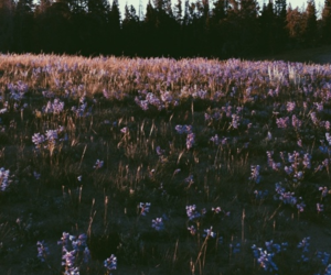 background, flowers, and forest image
