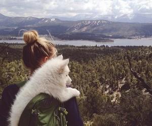camping, travel, and dog image