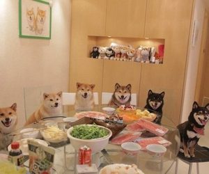 animals, dinner, and dogs image