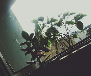 green, grunge, and plants image
