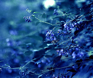 beautiful, leaves, and blue image