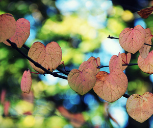 autumn, change, and heart image