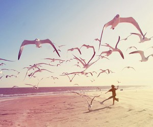 beach, bird, and summer image
