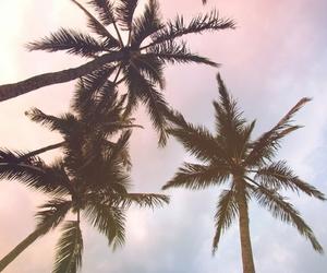 palms, palm trees, and sky image