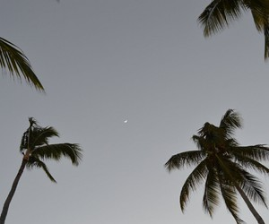 grunge, moon, and palm trees image