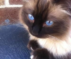 adorable, black and white, and blue eyes image
