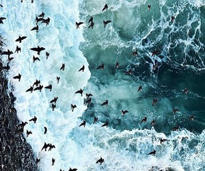 waves, birds, and sea image
