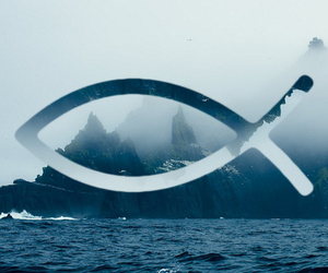 cool, fish, and fog image