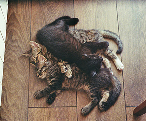 black, cats, and kittens image