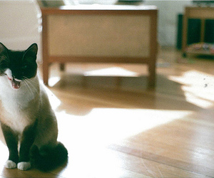 cats, kittens, and black and white image