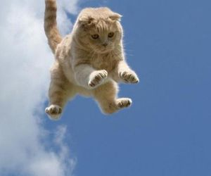 cat, blue, and sky image