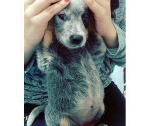 beauty, dog, and hanna image