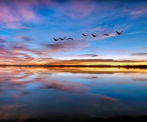bird, lake, and sky image