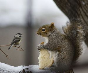 squirrel, bird, and animal image
