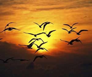 beautiful, bird, and enjoy image