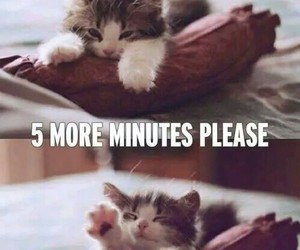 cat, sleep, and funny image
