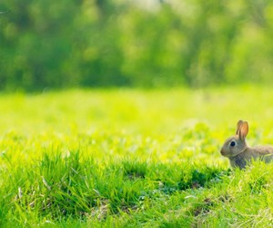bunny, green, and sweet image