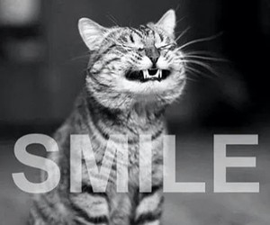 smile, cat, and funny image