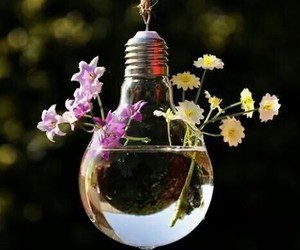 flowers, water, and light image